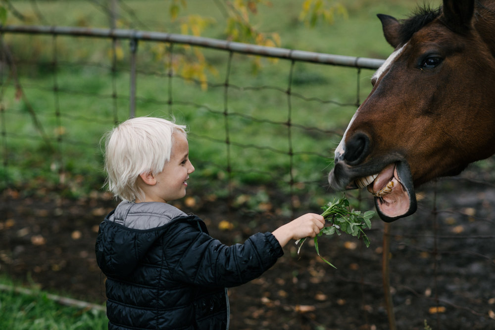 he hugged a horse, he fed another horse, and then when the horse