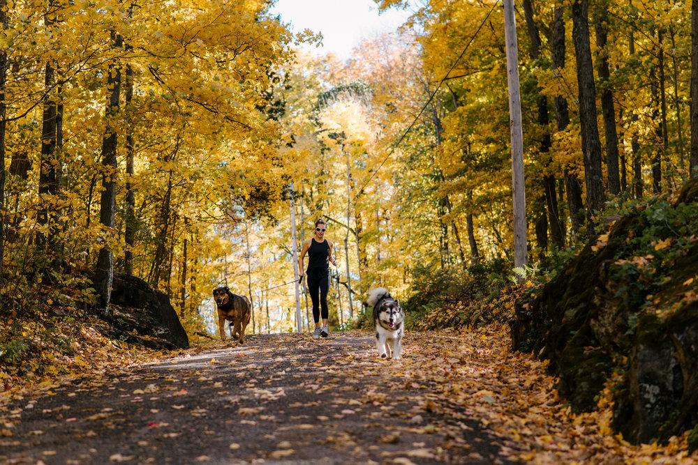 autumn documentary photography viara mileva-115915vm.jpg