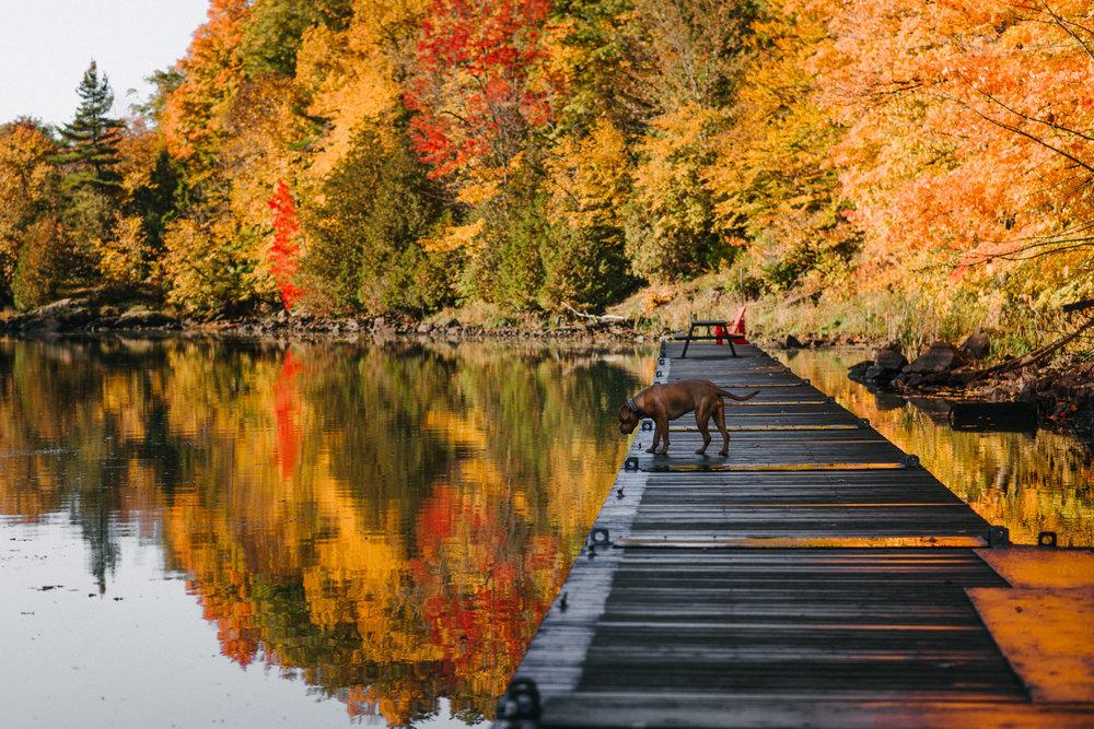 autumn dorumentary photography viara mileva-095651vm.jpg
