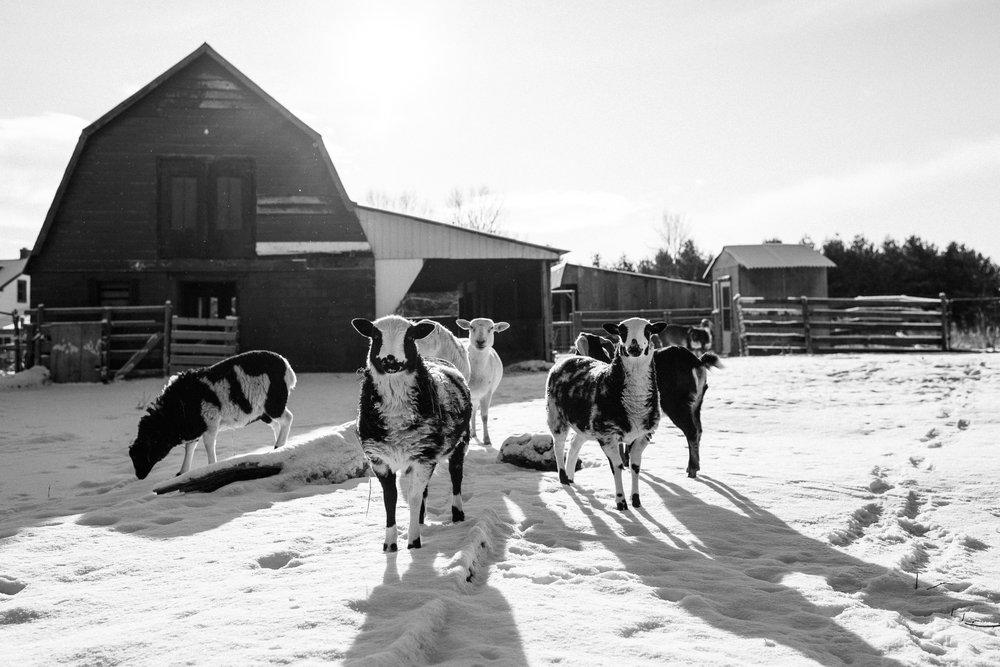 winter documentary photography viara mileva-104734vm.jpg