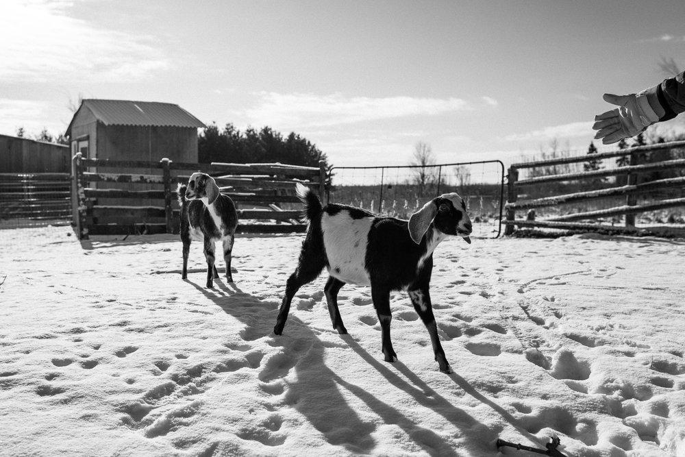 winter documentary photography viara mileva-114204vm.jpg