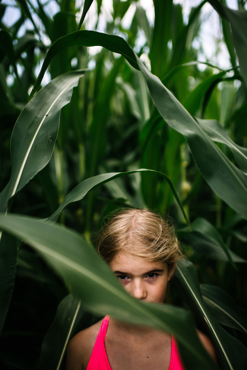 mysterious, in the corn