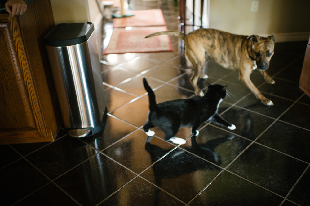 family documentary photography with cats and dogs-101925vm.jpg