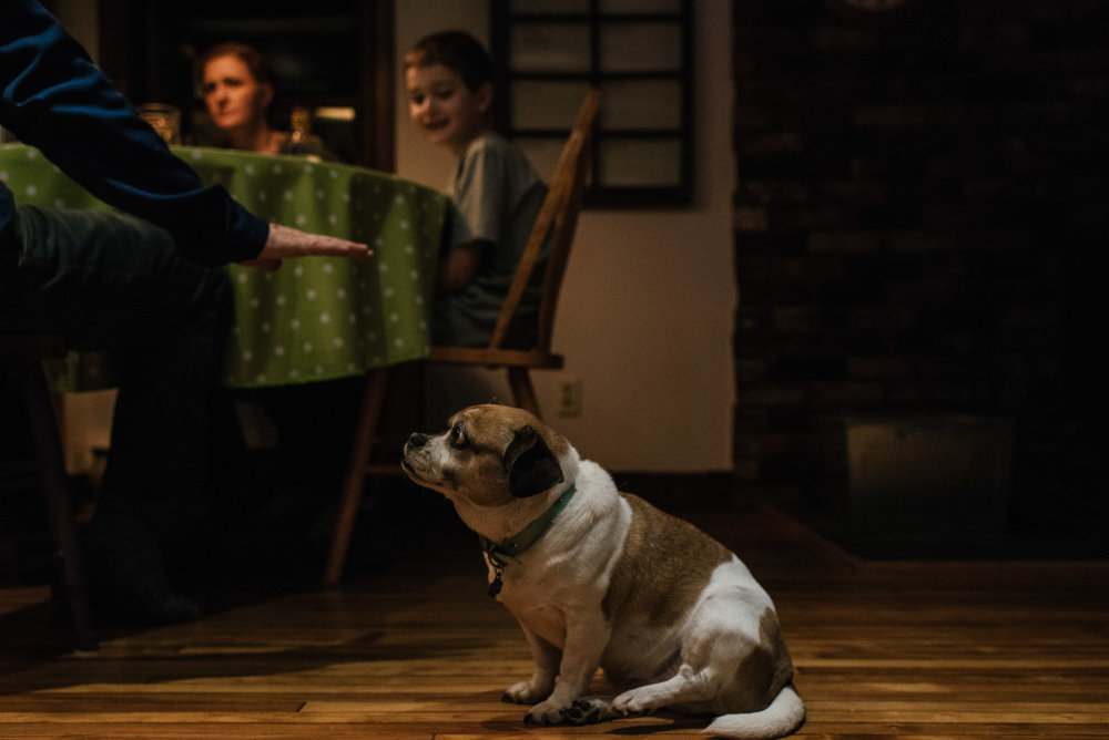 dog watches as family sits at the dinner table