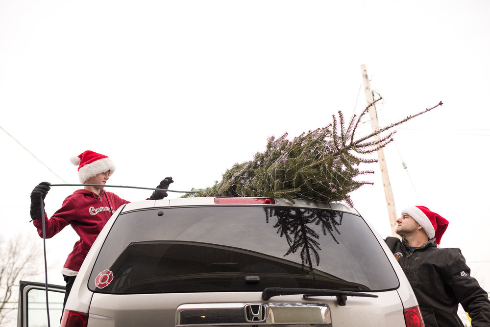 father and son in Santa hats unwrap a Christmas tree from the roof of the car