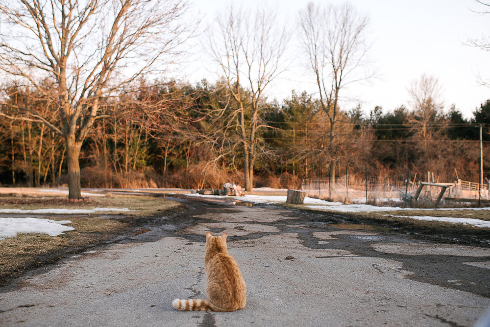Sushi, the cat, contemplating life on our driveway. He has a lot of wisdom. He even shares his kills with the chickens.