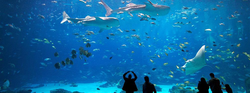 Must Go Places - Atlanta - Georgia Aquarium