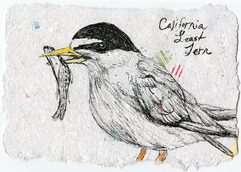 Stacie Birky Greene , Endangered, CA Least Tern