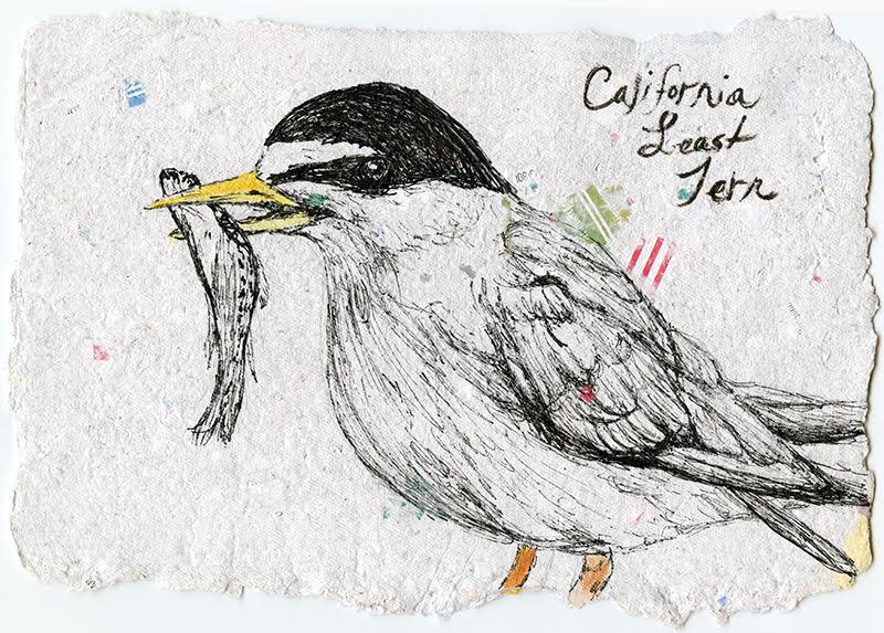 Stacie Birky Greene , Endangered, CA Least Tern