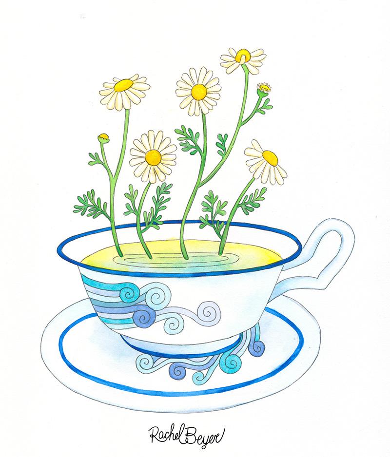 chamomile-1.jpg