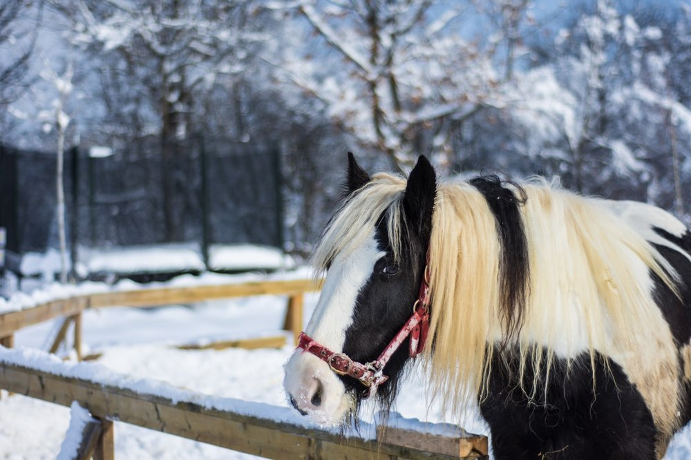 Horseback ride in the snow