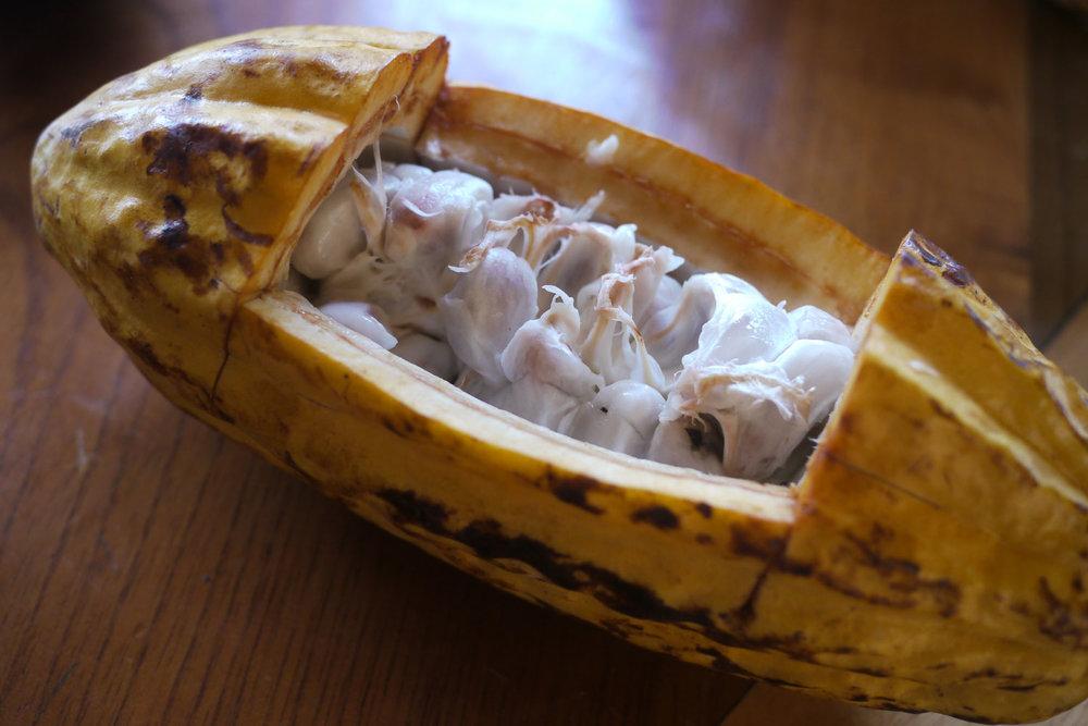 Open cocoa pod