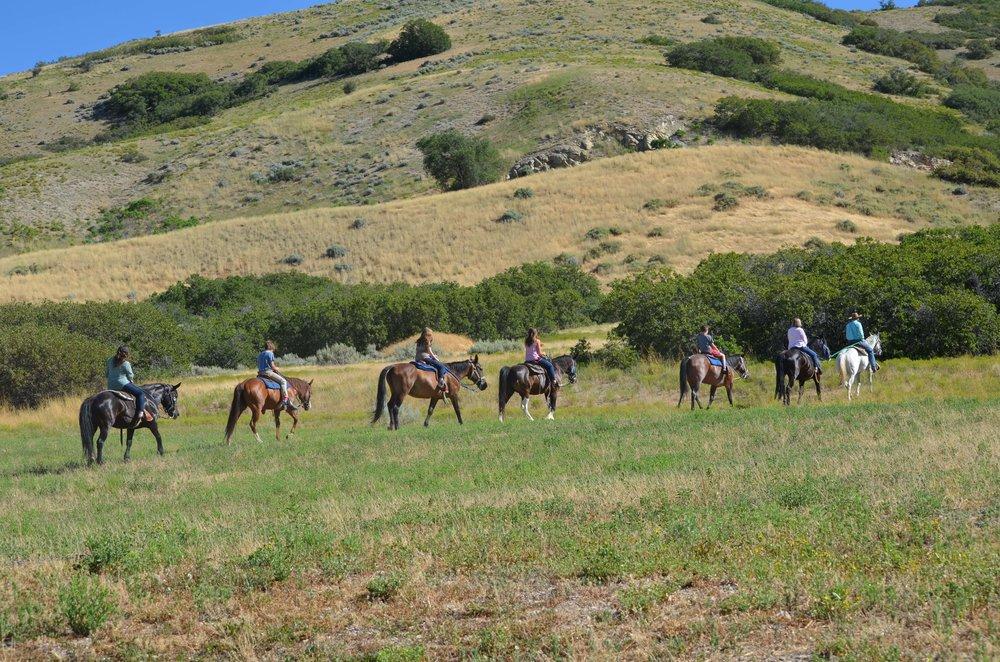 horseback-trail-rides_1.jpg