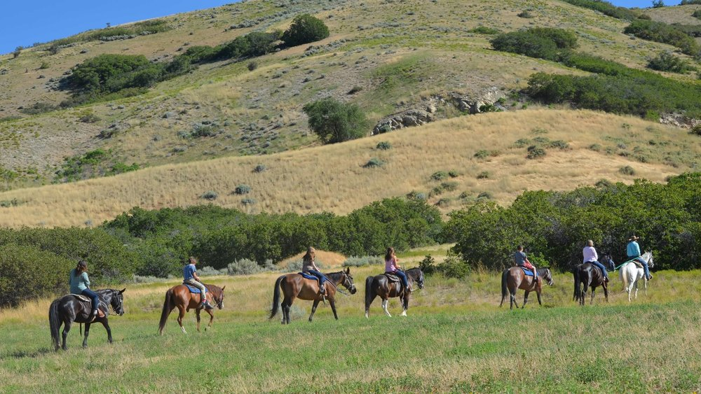 horseback-trail-rides.JPG