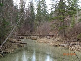 Beaver Pond.jpeg