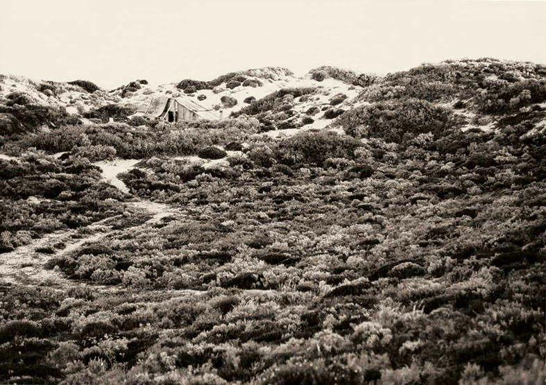 Cactus Landscape 1975 - digital print - photo John Witzig