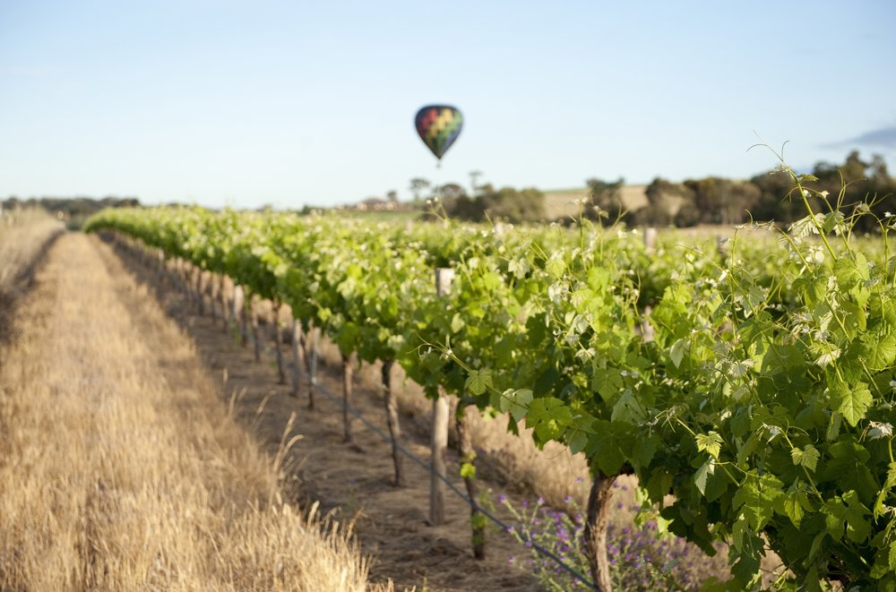Air-balloon-ride-over-vineyards-Barossa-photographer-Cameron-Bloom-SATC.jpg