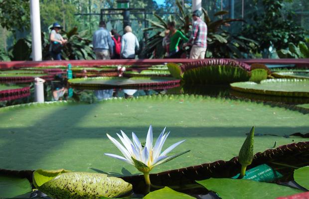 taste-a-global-garden-lilypad-2.jpg