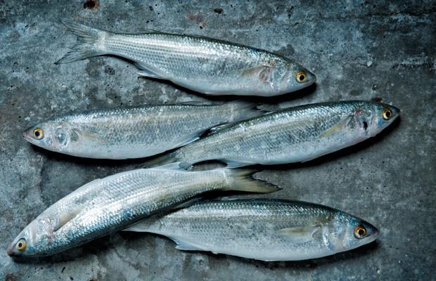 five-fish.jpg