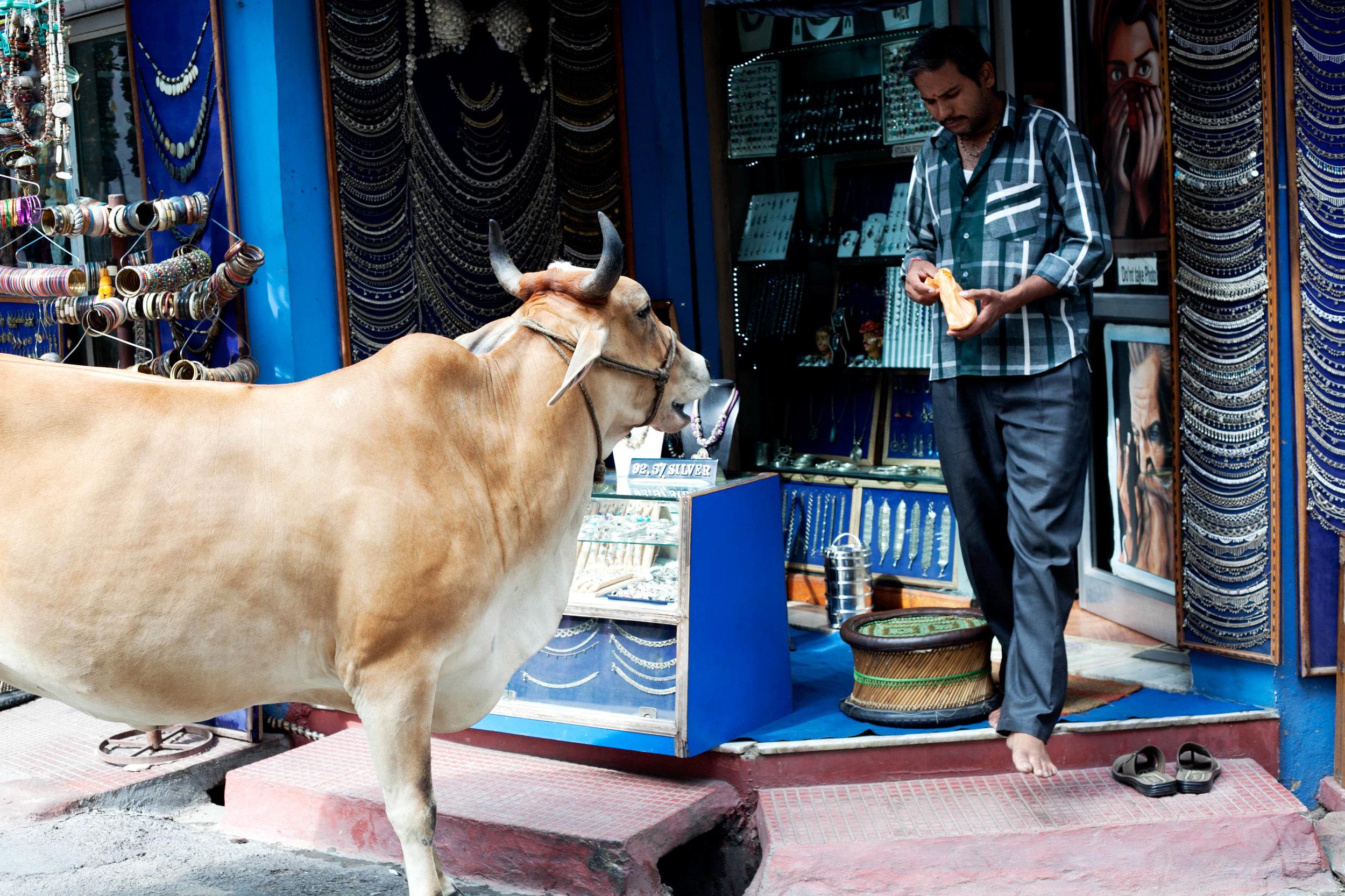 Udaipur streets3