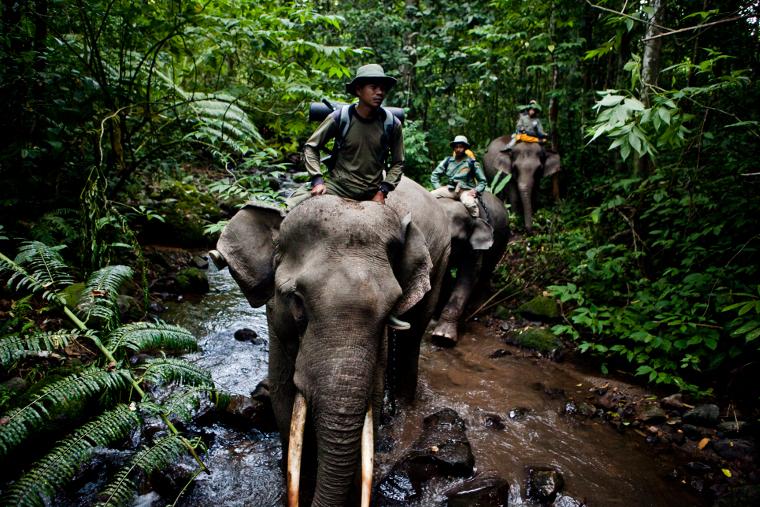 Elephant-Family.jpg