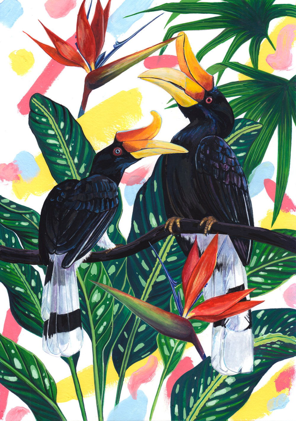 A couple of Rhinoceros Hornbills