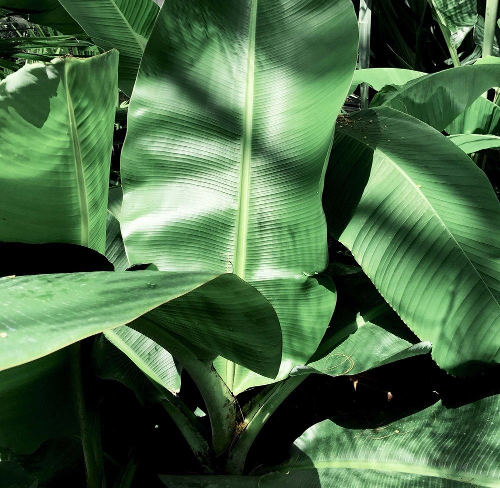 On Cloud Bloom - banana leaf image 2
