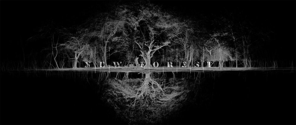 new-forest-film-co.jpg