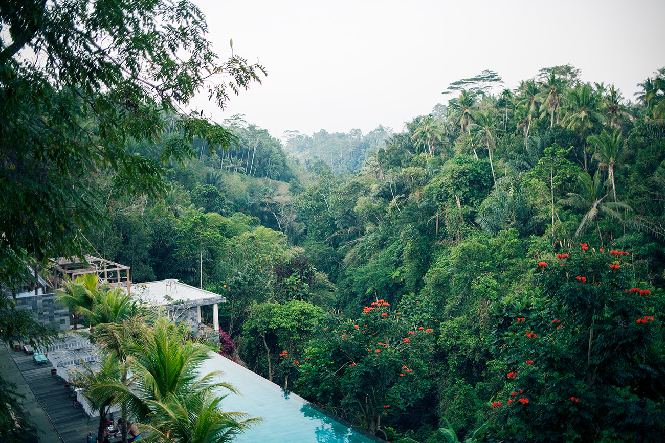 I could totally see myself living here, for example (Jungle Fish, Bali).