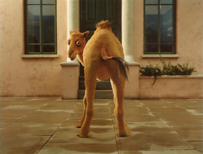 Camel & Building.jpg