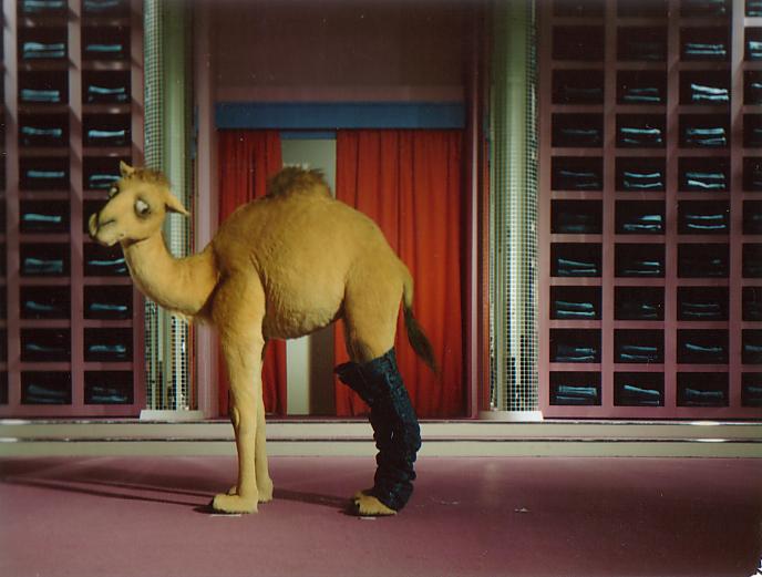 Camel & Jeans.jpg