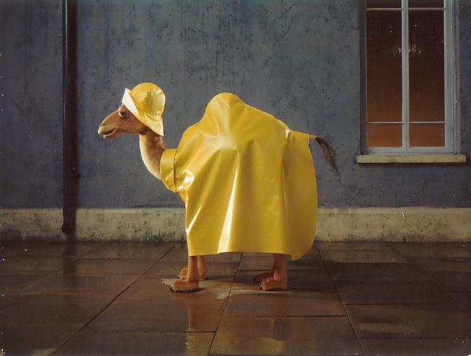 Camel & Rain.jpg