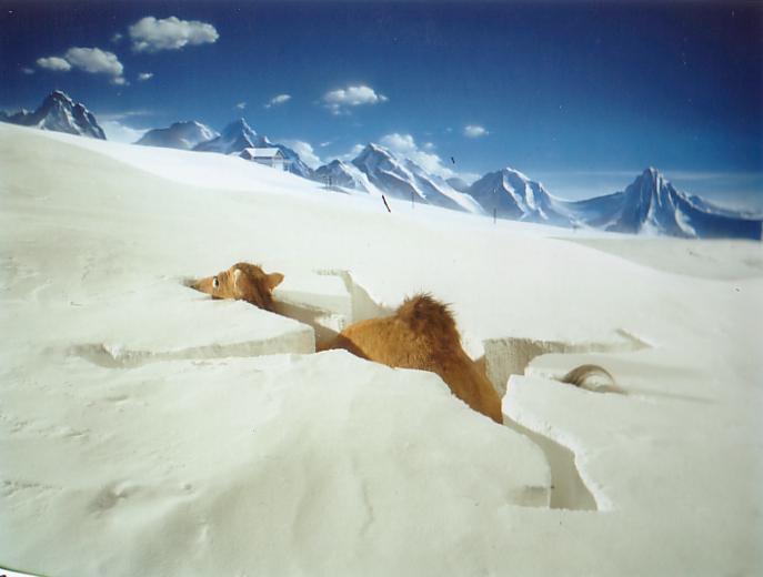 Camel & Snow.jpg