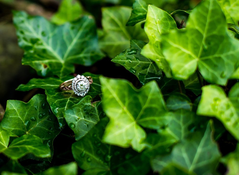 Engagement Ring in Ivy