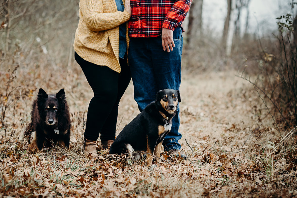 Two black dogs pose for the camera for their owners' engagement photos.
