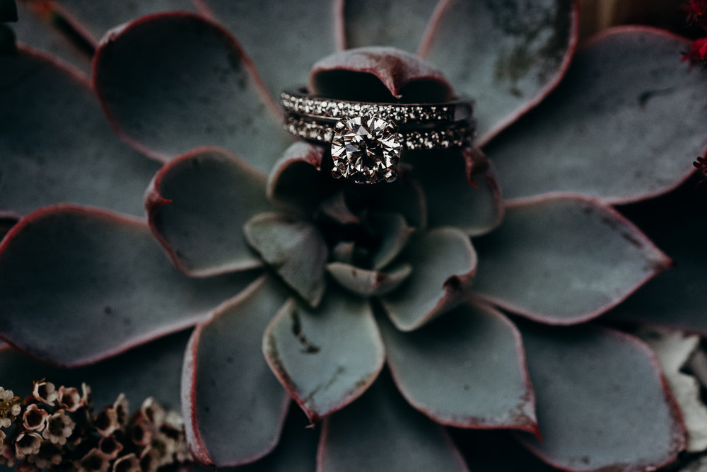 Wedding rings perched on a succulant