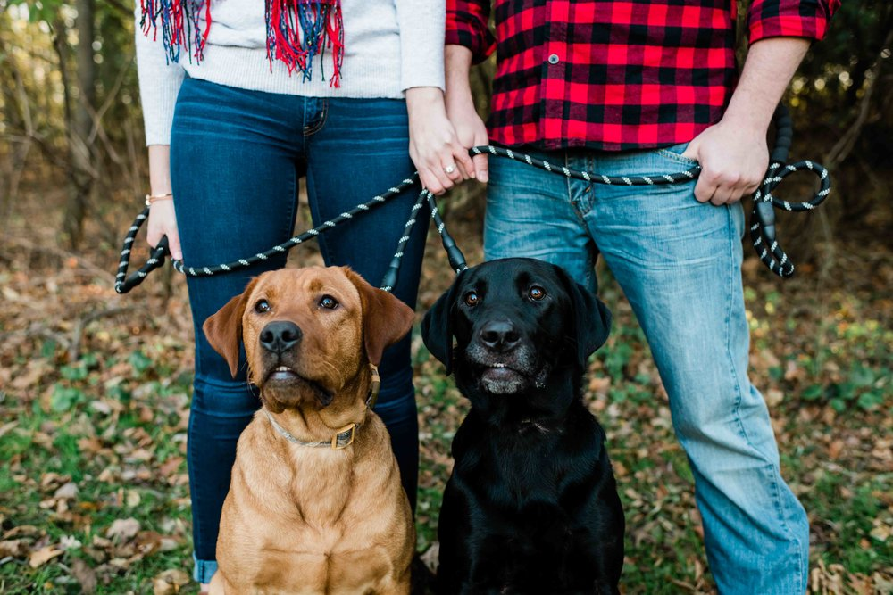 Dogs sit proudly with their mom and dad who recently became engaged