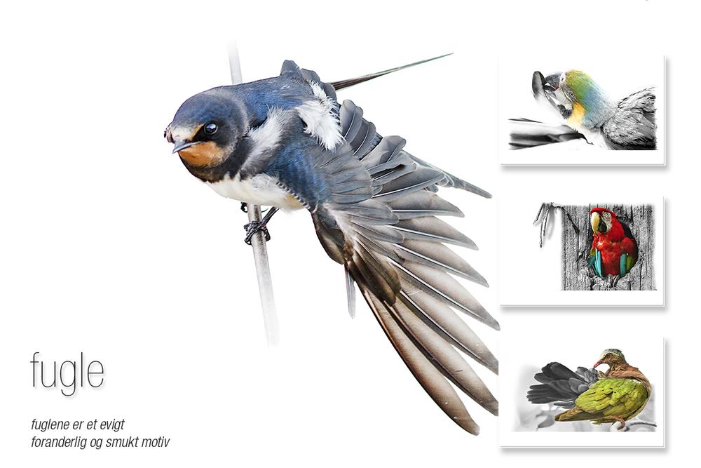 vægbilleder: fugle