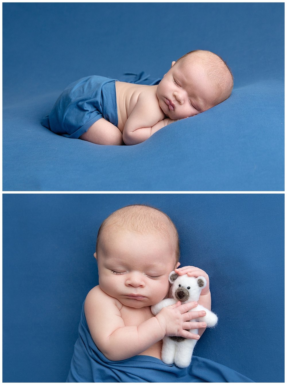 st-louis-newborn-photographer-baby-boy-on-bright-blue-backdrop-with-white-teddy-bear.jpg