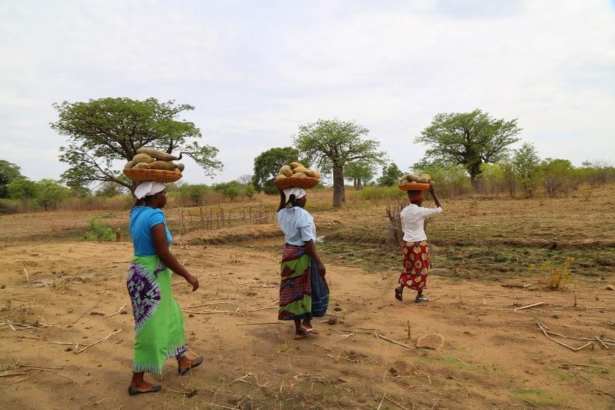 baobabharvesters.JPG