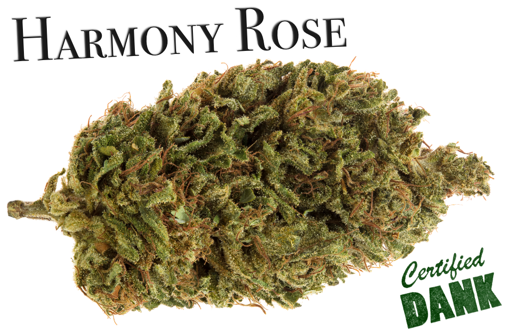 Harmony Rose review.jpg