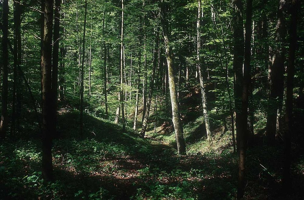 Benefits of Trees - General forest-01.jpg