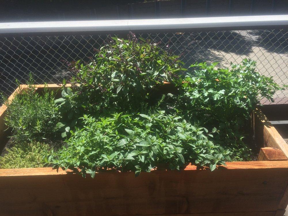 Growing PLants -