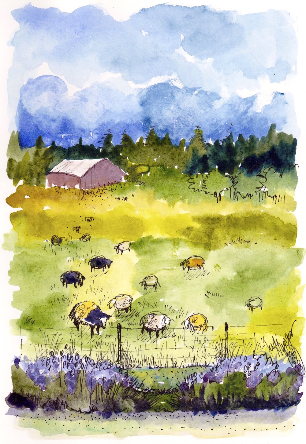 City Sheep and Lavender