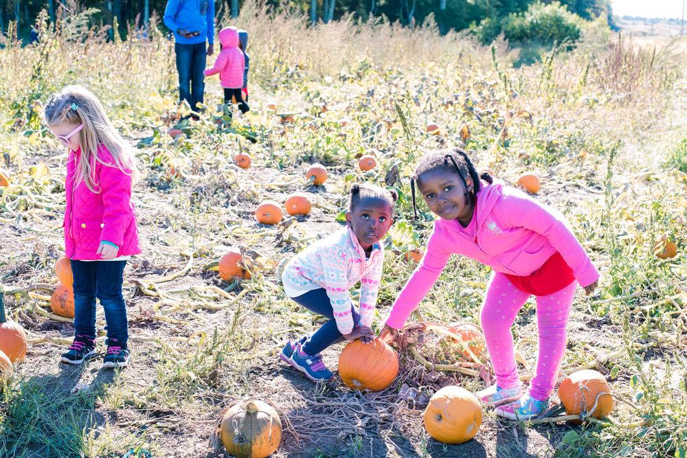 Picking Pumpkin at Wardsberry Farm (11 of 1).jpg