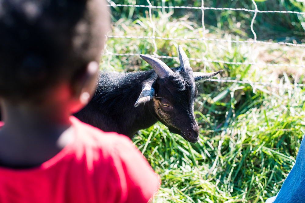 Goat Yoga Powers Farm Randolph Harvest Hoopla (6 of 1).jpg
