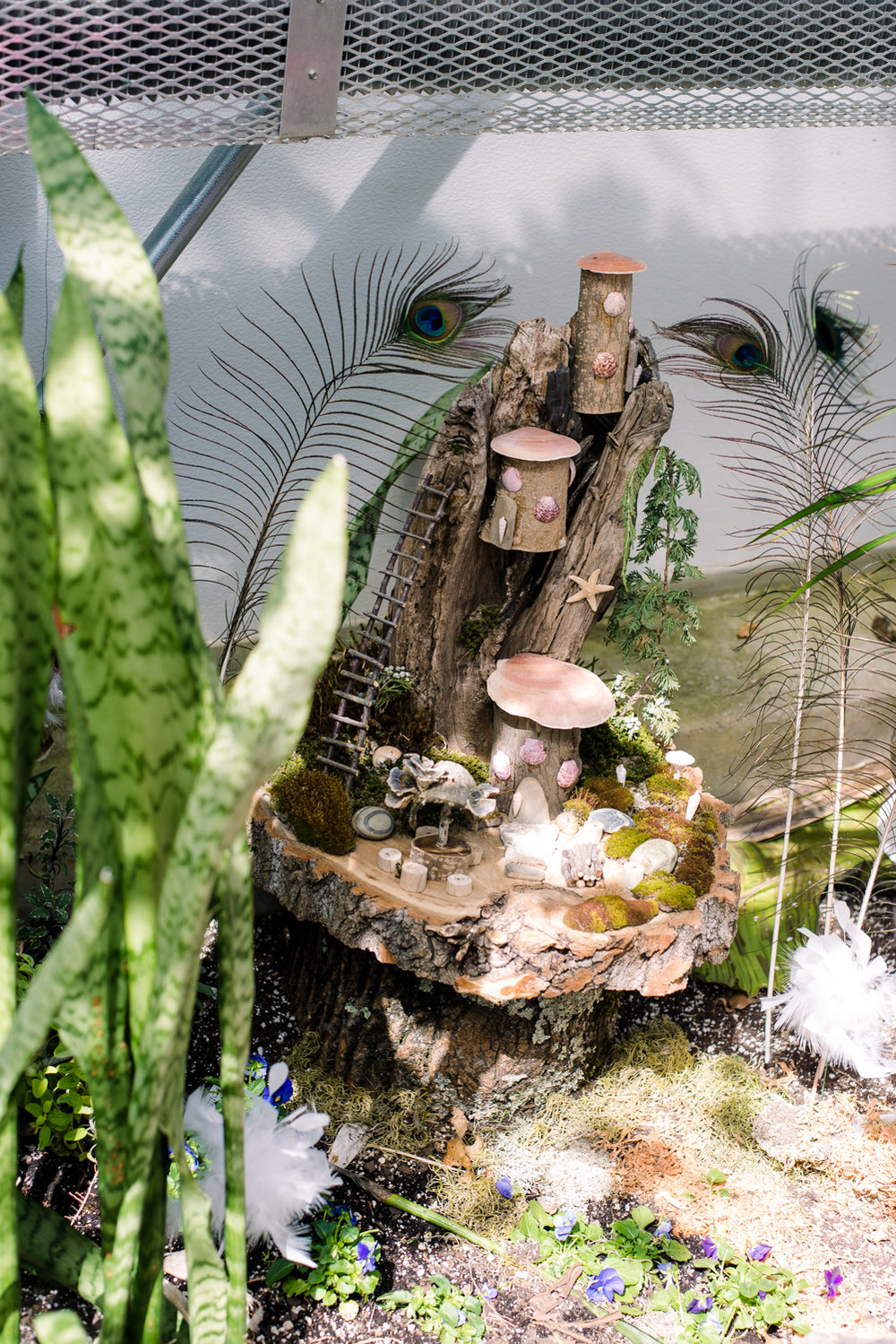 Fairy Houses at Roger Williams Botanical Garden (2 of 1).JPG