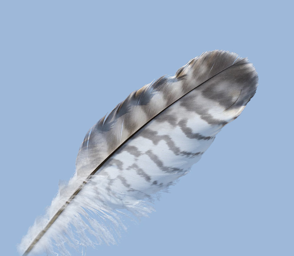 Feather - 001.jpg