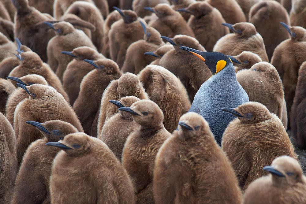 penguins.jpg