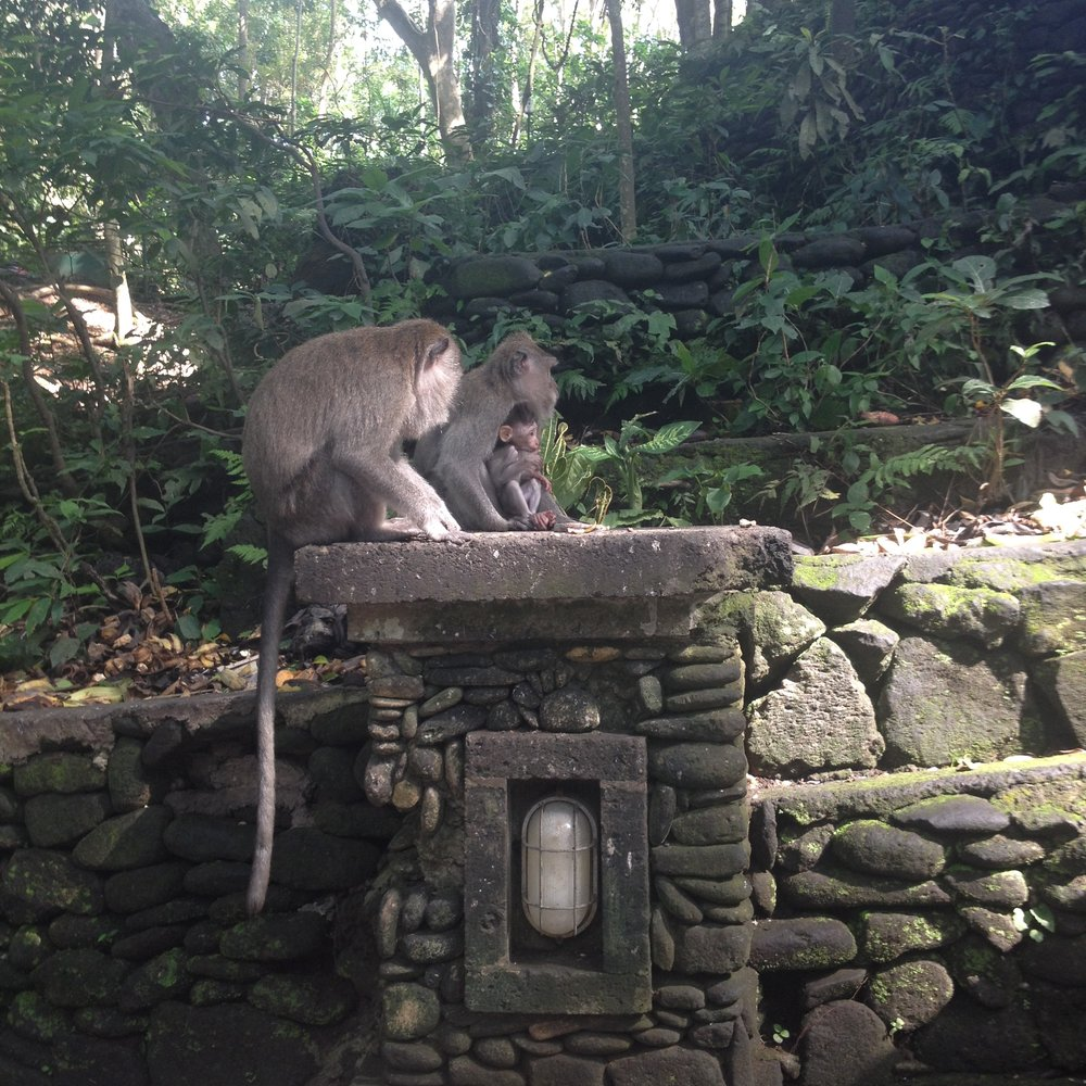 Monkey Sanctuary Bali Indonesia